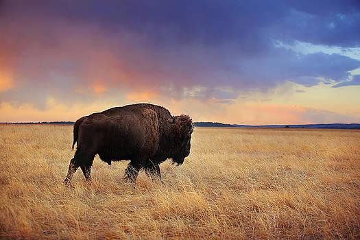 Deborah Johnson -  March across the prairie