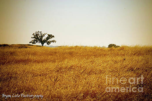 Solo Valley Oak 916 by Bryan Cole Photography