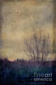 Somber by Priska Wettstein