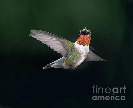 Some Acrobatics by Arnie Goldstein
