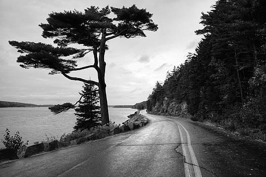 Somes Sound - Acadia - Maine by Geoffrey Coelho