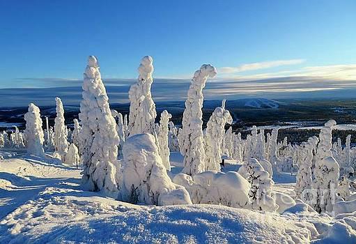 Winter Forest by Irina Hays