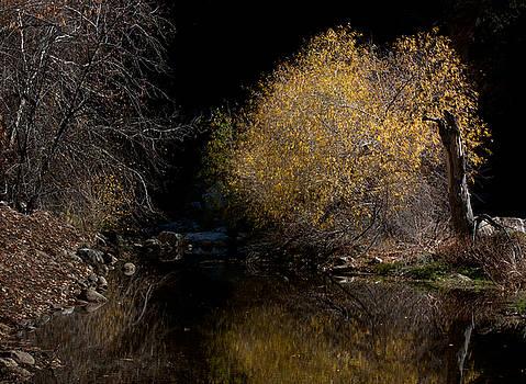 Somewhere North of Tuscon by Mary Nash-Pyott