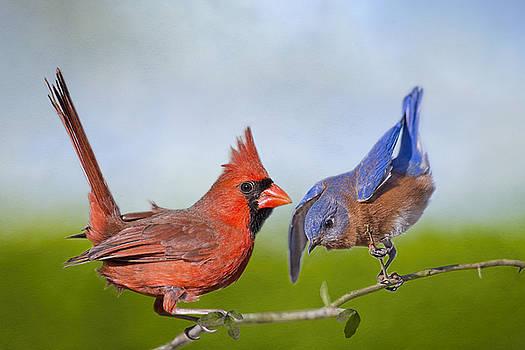 Songbird Playground by Bonnie Barry