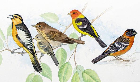 Songbirds by Shari Erickson
