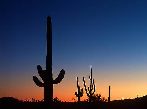 Sonora Desert sunset by Johan Elzenga