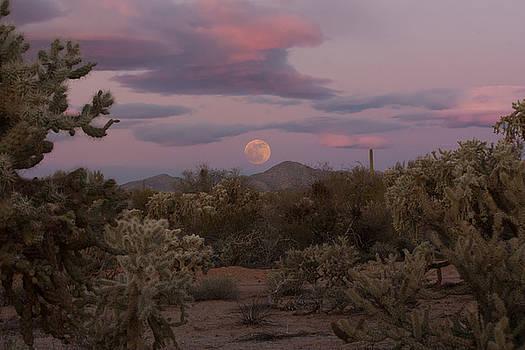 Sonora Moon by Mary Nash-Pyott