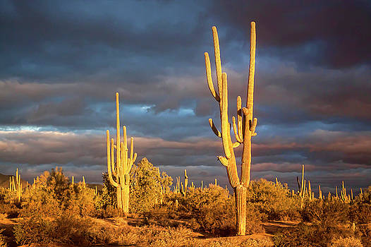 Sonoran Dawn by Ryan Seek