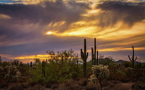 Saija Lehtonen - Sonoran Fall Sunset