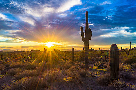 Sonoran Flare by Casey Stanford