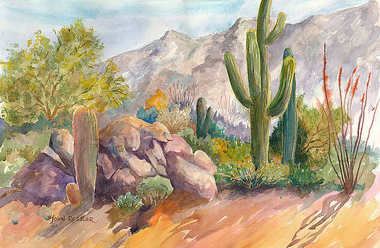 Sonoran Garden II by John Ressler