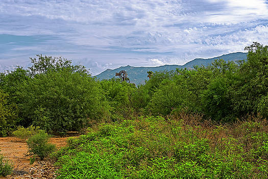 Sonoran Greenery h30 by Mark Myhaver