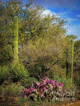 Jon Burch Photography - Sonoran Holiday