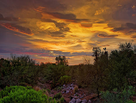 Sonoran Sonata h01 by Mark Myhaver