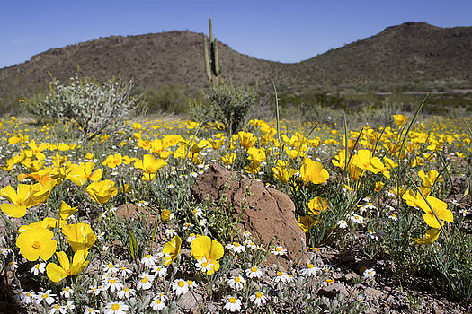 Sonoran Spring by Ryan Seek