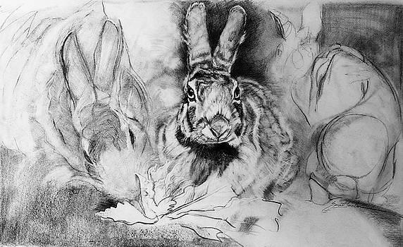 Soporific- Hungry Rabbits by Susie Gordon