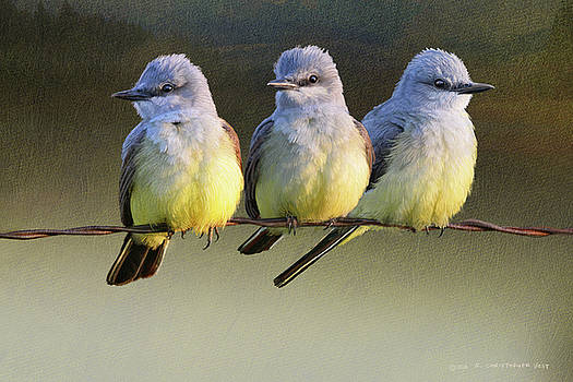 Sought After Spot For Kingbirds by R christopher Vest