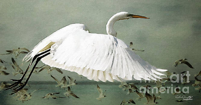 Souls take flight ... by Chris Armytage
