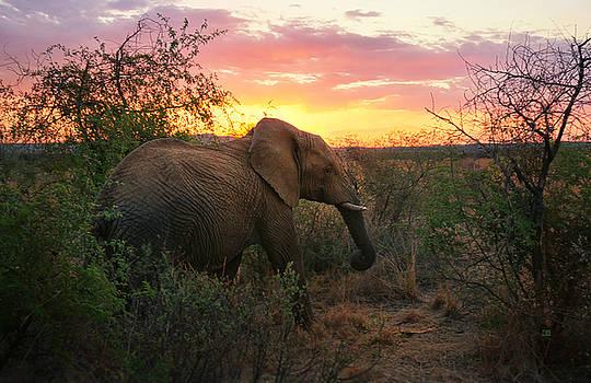 South African Elephant at Sunset - Black Rhino Reserve by Menega Sabidussi