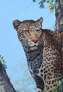 South African Leopard by Eric Wilson