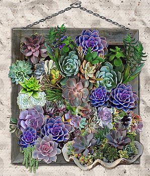 South Africa's Succulents by Nadine May