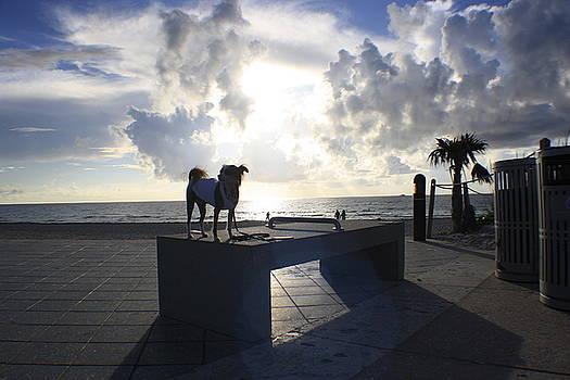 South Beach Dog Walk by Mandy Shupp