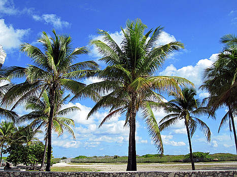 South Beach Miami by Molly McPherson