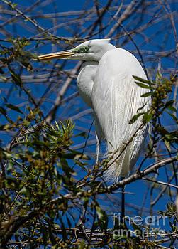 Dale Powell - South Carolina Egret
