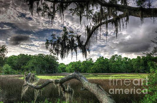 Live Oak Marsh View 2 by Dale Powell