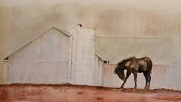 South Side-Percheron Horse by Susie Gordon