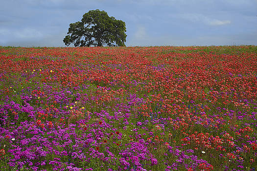 Susan Rovira - South Texas Bloom