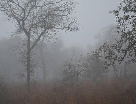South Texas Fog I by Carolina Liechtenstein