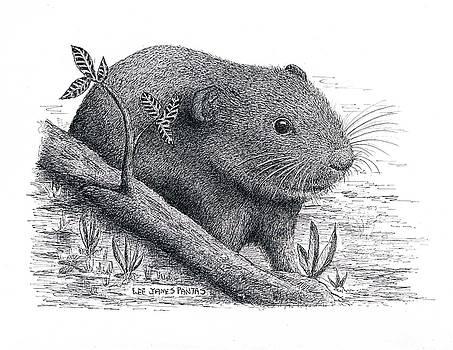 Lee Pantas - Southern Bog Lemming