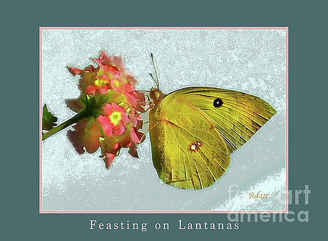 Felipe Adan Lerma - Southern Dogface Butterfly Feasting on December Lantanas Austin v2 Greeting Card Poster