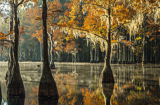 Southern Gold by Eric Albright