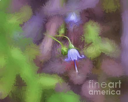 Southern Harebell Wildflower by Kerri Farley