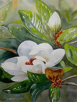 Southern Magnolia by Becky Taylor