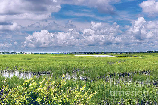 Dale Powell - Southern Marsh Lowcountry Tides