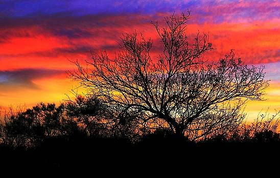 Southwestern Sky  by Kimmi Craig