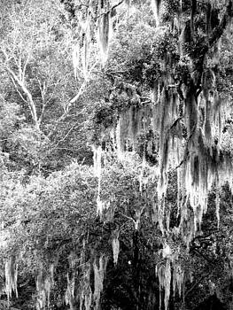 Southern Splender by Kim Zwick
