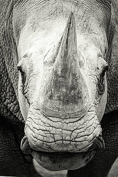 Susan Schmitz - Southern White Rhinoceros Closeup Black and White