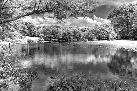 Southford State Park Infrared by David Clark