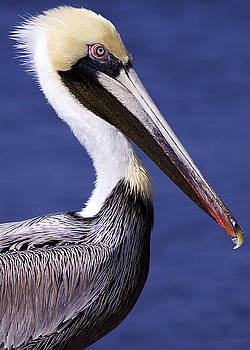 Southport Pelican 2 by Nick Noble