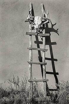 Southwest Kiva Ladder and Skull by Steven Bateson