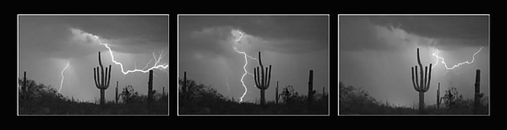 James BO Insogna - Southwest Saguaro Cactus Desert Storm Panorama BW