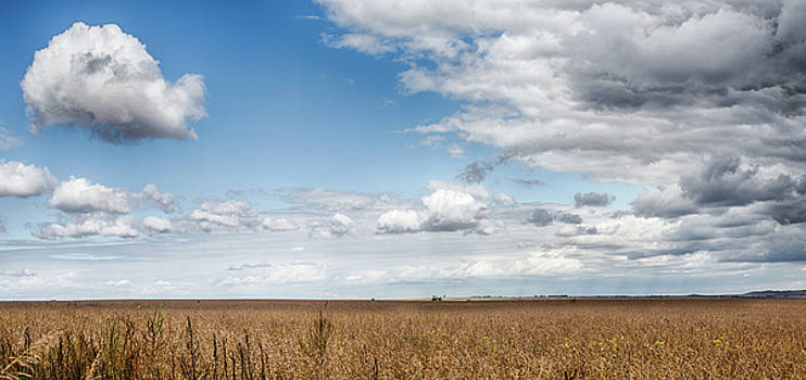 Soybeans and Clouds by Nathan Larson