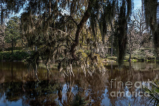Dale Powell - Spainsh Moss hanging over Pond on Middleton Place