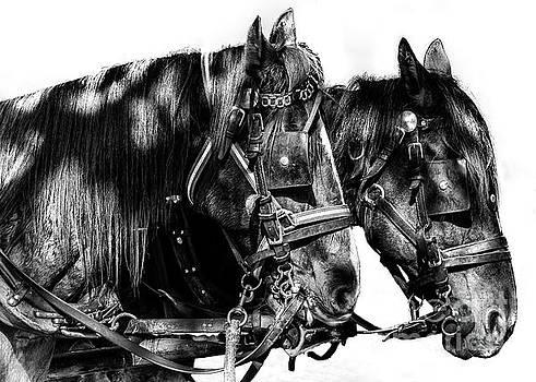 Spaniards by Christos Koudellaris