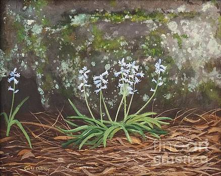 Spanish Bluebells by Carla Dabney