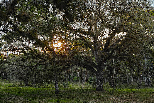 Spanish Moss during Sunset by Roberto Aloi